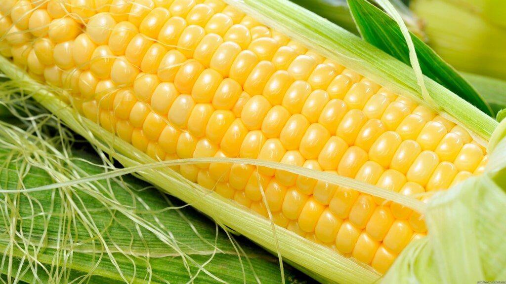 Кукуруза полезна для спортсменов