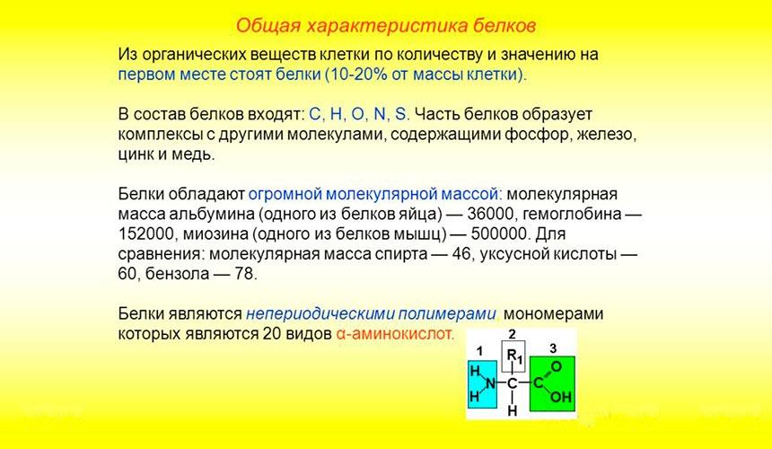 Общая характеристика белка