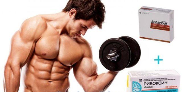 Магний участвует в белковом обмене, что так же влияет на процесс наращивания мышечной массы